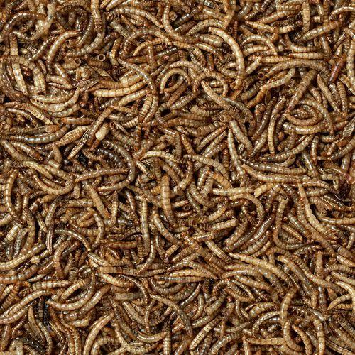 https://morrismica.co.uk/wp-content/uploads/product/pet1worms.jpg